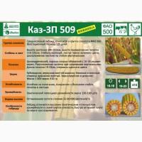 Семена кукурузы КАЗ-ЗП-509