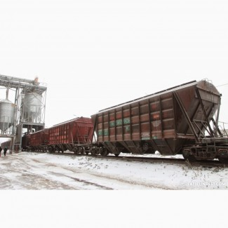 TOO TOP Tehnology реализует пшеницу 3-4 класса с отправкой до станции назначения