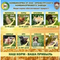 Комбикорма полнорационные ТОЛЬКО ОПТОМ для всех видов С/х животных, птиц и рыб