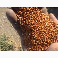 ТОО «Найдоровское» реализует чистый просо по цене