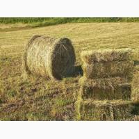 ТОО «Найдоровское» реализует сено житняк