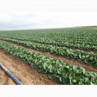 Закуп на постоянной основе овощей, фруктов, ягодных, бахчевых на территории РК