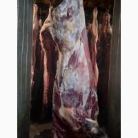 ООО Сантарин, реализует говядину, быки, коровы
