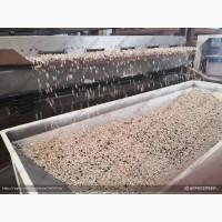 Семенорушка, оборудование раздробления семян и получения ядра