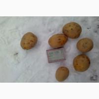 Семенной картофель 3 репродукции