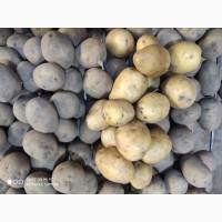 Картофель 3+ до 5
