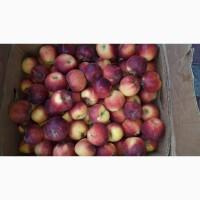 Продам яблоки местные оптом