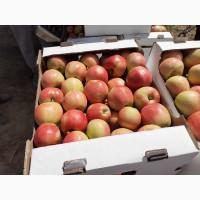Яблоки, 6 сортов