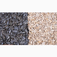 Линия для очистки, шелушения и сепарации семян подсолнечника TFKH-600