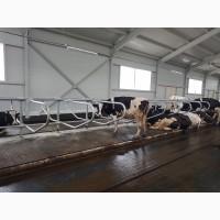 Стойловое оборудование для коров