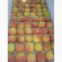 Куплю абрикосы 2019