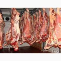 Предлагаем говядину из Республики Беларусь
