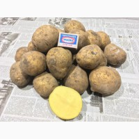 Продам товарный картофель, сорт Гала, Джувел, калибр 5