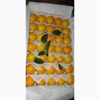 Лимон на Экспорт из Солнечного Узбекистана