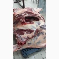 Продаю говядину тушевую производство РК