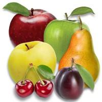 Саженцы яблони, груши, черешни, сливы. Проекты садов и поддержка. Ищем представителя