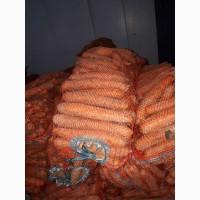 Продам морковь оптом из Беларусии