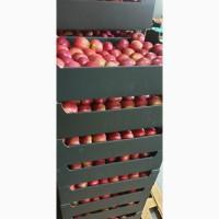 Оптовые поставки яблок из Польши