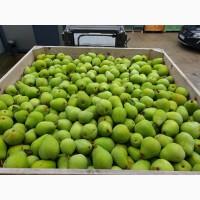 Оптовые поставки груши из Польши