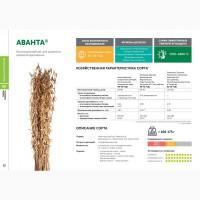 Семена сои: сорт АВАНТА селекции Компании Соевый комплекс (Россия)