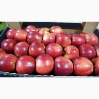 Яблоко польского высокого качества