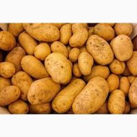 Картофель, лук