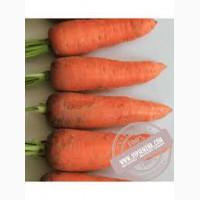 Шантане морковь