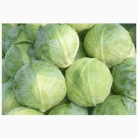 Продаём капусту сорт: доминат, ларсия, атрия, орион. 1, 5-3, 5кг
