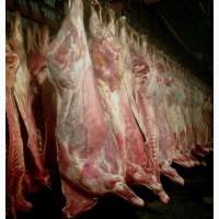 Продам мясо говядины, конины оптом