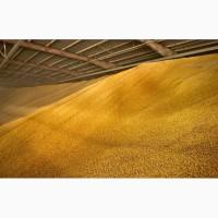 Продам пшеницу продовольственную 3 класса
