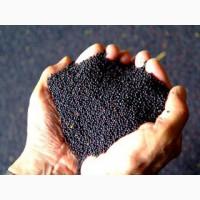 Flax seeds, rape seeds, mustard for export