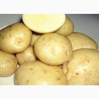 Семенной картофель голландских сортов (РИВЬЕРА, ИМПАЛА, ЭВОЛЮШЕН, АРИЗОНА, АЛУЭТ, ФОНТАНЕ)