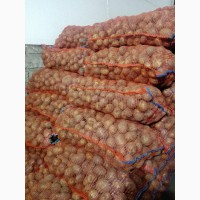Картофель оптом от 5 тонн (картошка)