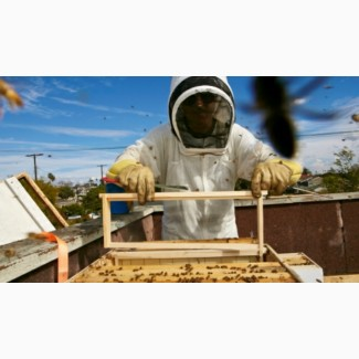 Продам пчелопакеты карпатка 4 рамки расплода звоните на WhatsApp