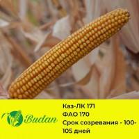 Семена кукурузы Каз-ЛК 171