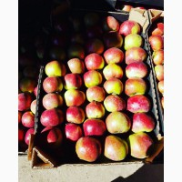 Яблоко производства Беларусь