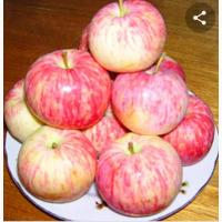 Продам яблоки. сорт Пеструшка