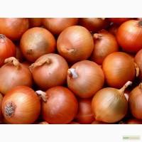 Производство ищет надежных поставщиков овощей