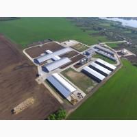 Строительство, реконструкция молочно-товарных ферм, откормочников