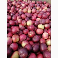 Яблоки высшего сорта