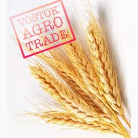 Реализуем пшеницу, ячмень, отруби