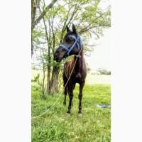 Продам лошадя 2-х летний
