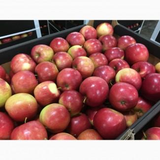 Польское яблоко от производителя La-Sad