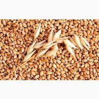 Закупаем пшеницу 4 класса