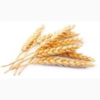 Продам пшеницу мягких сортов