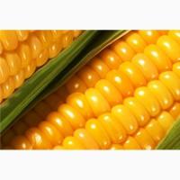 Желтая кукуруза без ГМО (корм для животных)