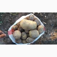 Продаем овощи и картошки