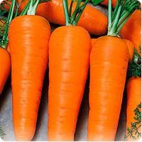 Куплю Морковь