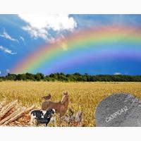 Кормовая добавка для обогащения и баланса рационов с/х животных