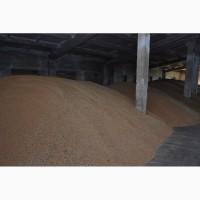 Продаём пшеницу 3-4 класса, в любых объемах.Оправка Афганистана Иран